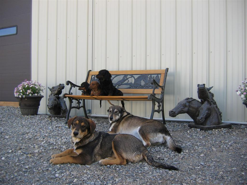 The Dogs of Pend Oreille Farms
